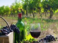 Шираз вино — история, особенности, обзор вкуса, цвета и плотности вина (115 фото)