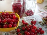 Самогон на вишне — лучшие рецепты и простые варианты приготовления. 100 фото и видео как делается самогон из вишни