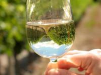 Вино Блан (Sauvignon Blanc): обзор вкуса, цвета, качества, цена и описание вина (115 фото и видео)